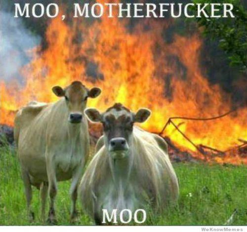 moo-motherfucker-moo