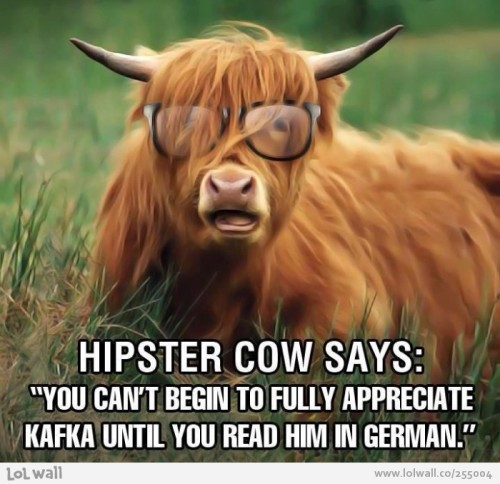 hipster-cow